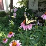 Louie's Garden